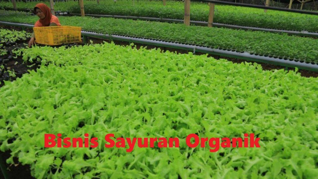 Bisnis Sayuran Organik